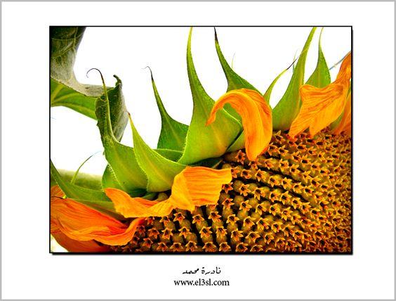 SunFlower by el3sl on DeviantArt