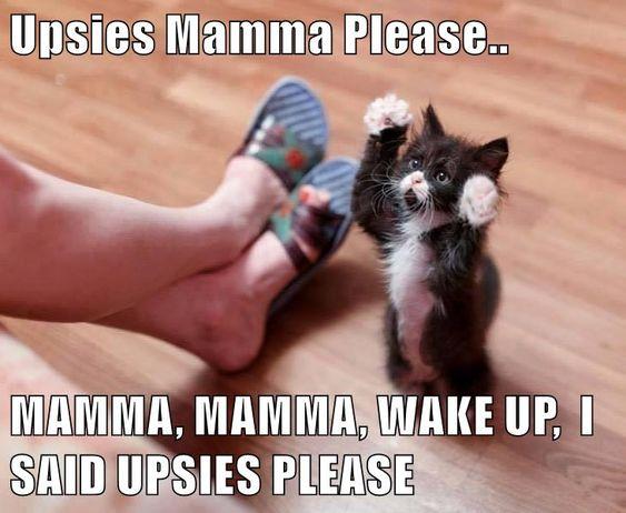 MAMMA, MAMMA, WAKE UP, I SAID UPSIES PLEASE