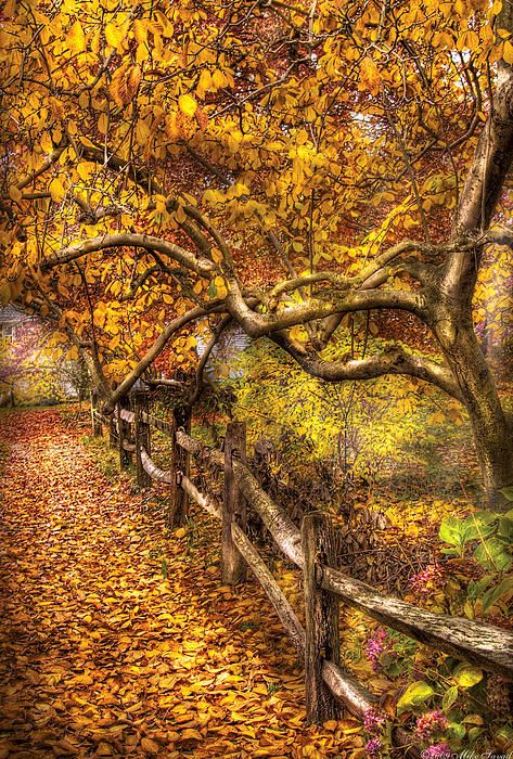 ☀Autumn - Landscape - Country Road Side by Mike Savad