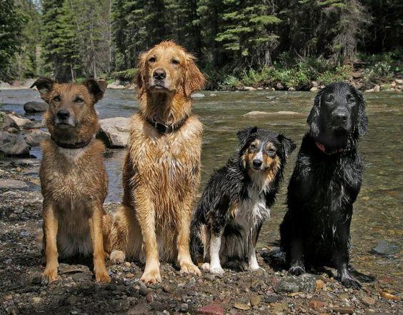 The river gang - Imgur