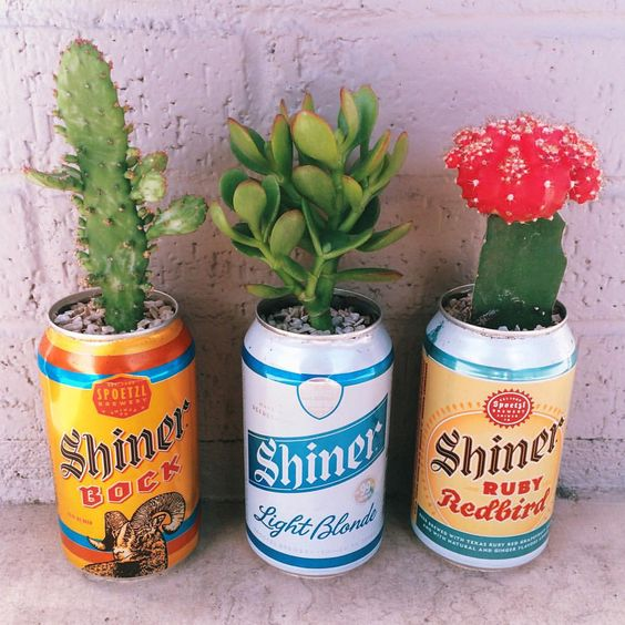 "Becca Marie Garza on Instagram: ""How cute are these babies I put together?! My two favorite things: beer & succulents!"":"