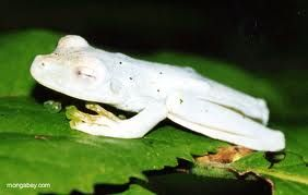 Sleeping white froggy