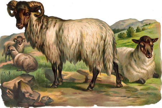 Oblaten Glanzbild scrap die cut chromo  Schaf  XL 24cm sheep Bock Weide gras: