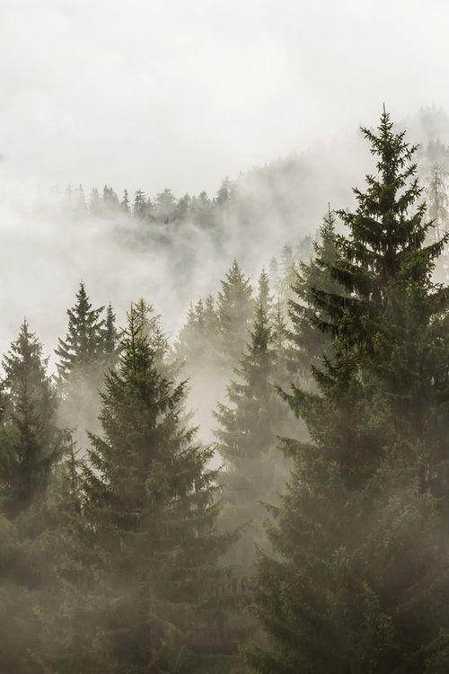 Un refugio entre la niebla [Celeste] 9c5a9f4f651ce7faf327f7633423db9e