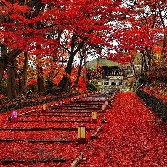 """BD Bucket List #596- Kyoto, Japan (by @tak440224)"" Photo taken by @jeremyjauncey on Instagram, pinned via the InstaPin iOS App! http://www.instapinapp.com (08/03/2015)"
