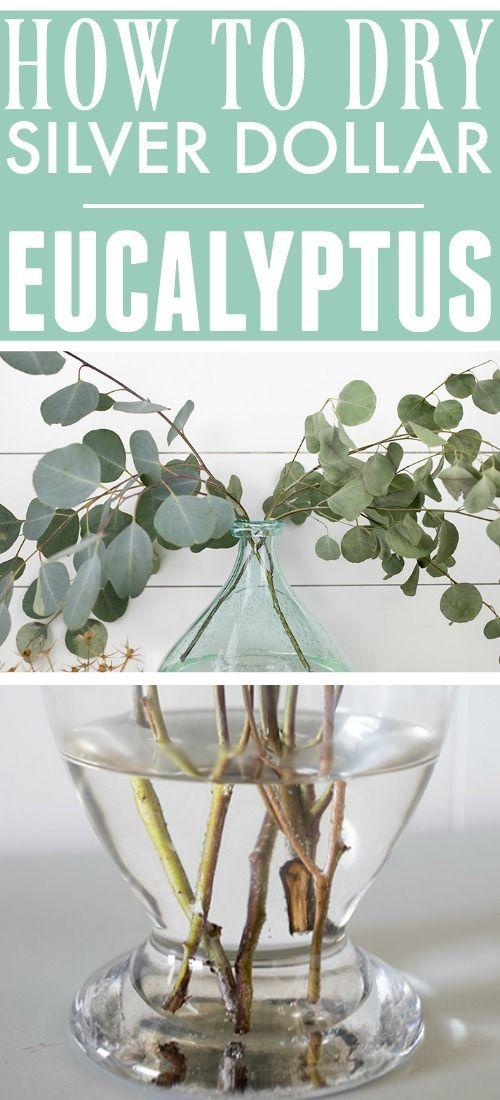 How To Dry Silver Dollar Eucalyptus The Creek Line House In 2020 Silver Dollar Eucalyptus Dried Eucalyptus Eucalyptus