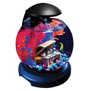 Betta tank aquarium and betta on pinterest for Small fish tank with waterfall