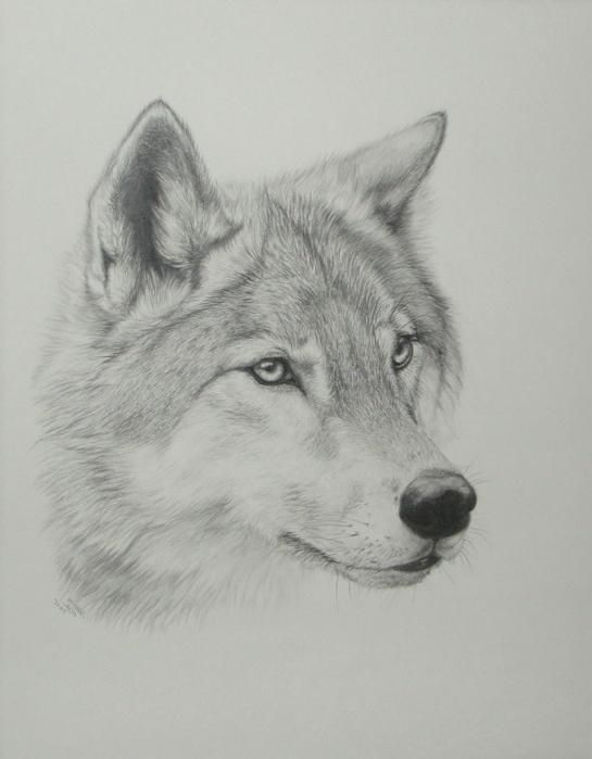 Wolf Head Drawing Step By Step