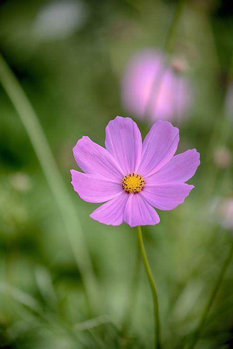 These Pretty Purple Flowers Go Way Beyond Lavender And Lilac Purple Flowers Wallpaper Pretty Flowers Pictures Purple Flowers