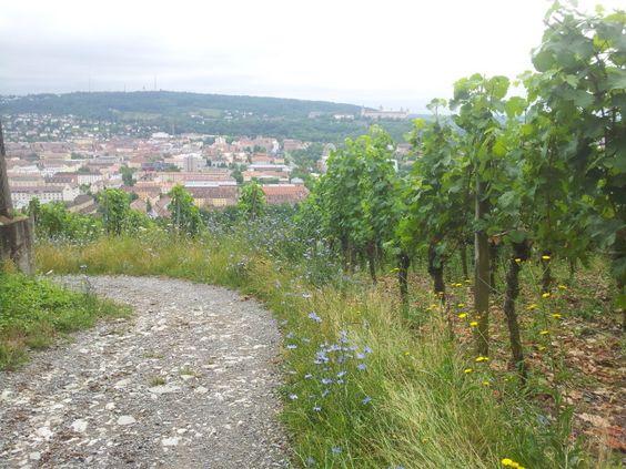 Steinweinpfad in Würzburg – Spaziergang zwischen Weinreben - Bayern-Reiseblog