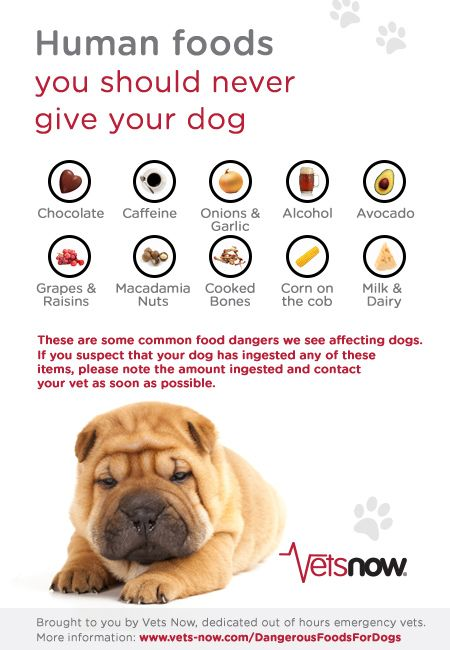 Top tips on common human foods that are poisonous to dogs.