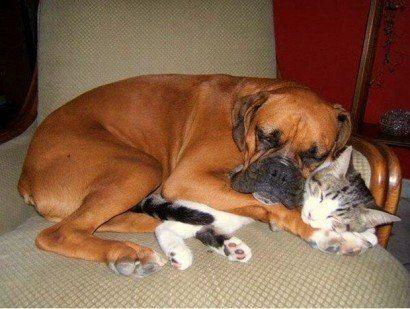 Cães e gatos melhores amigos