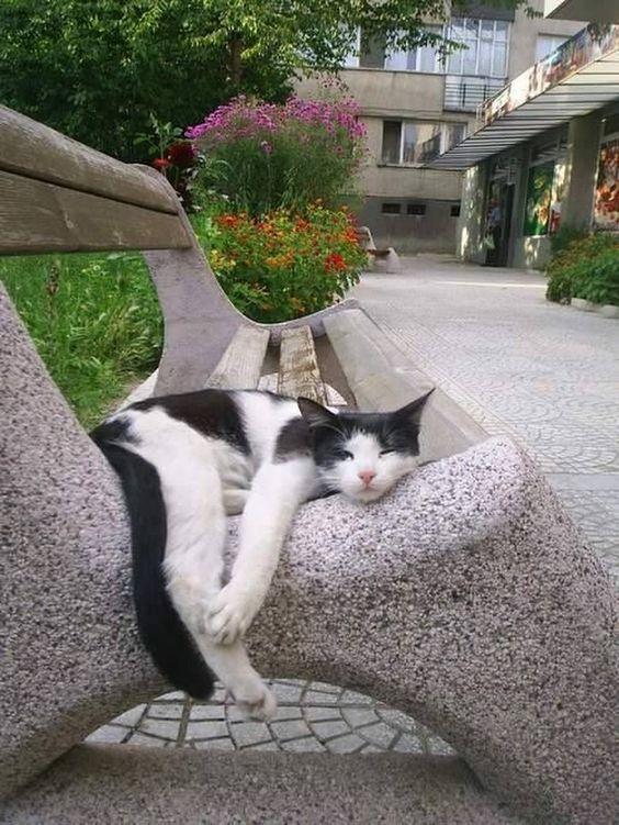 C'est éreintant la vie de chat!