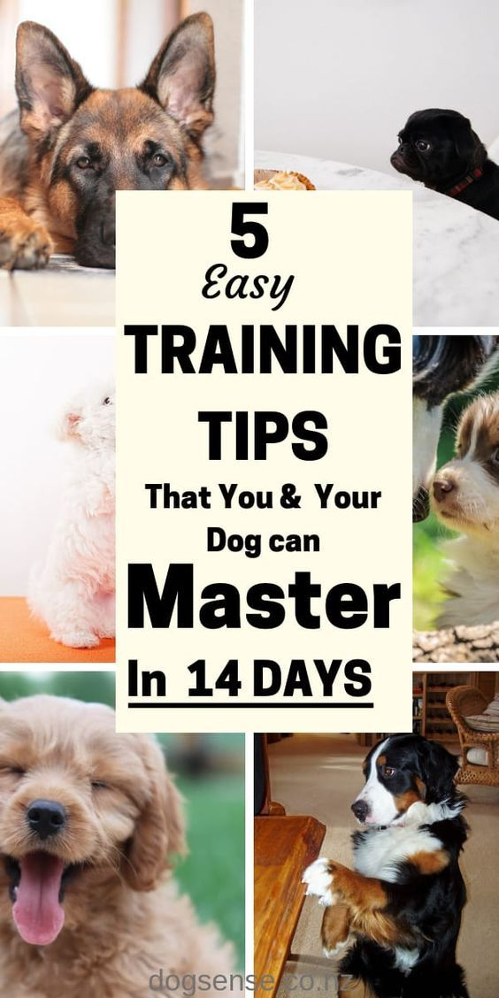 5 Super Easy Dog Training Tips Learn In Just 14 Days