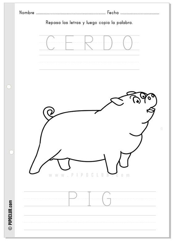 Actividad cerda pig