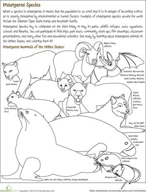 Worksheets Endangered Animals Worksheets Grade 2 endangered species worksheets and coloring on pinterest second grade animals page