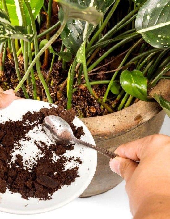 Richtig Und Vielfaltig Kaffeesatz Als Dunger Im Garten Anwenden Wohnideen Und Dekoration Gemahlener Kaffee Kaffeesatz Kaffeesatz Fur Pflanzen