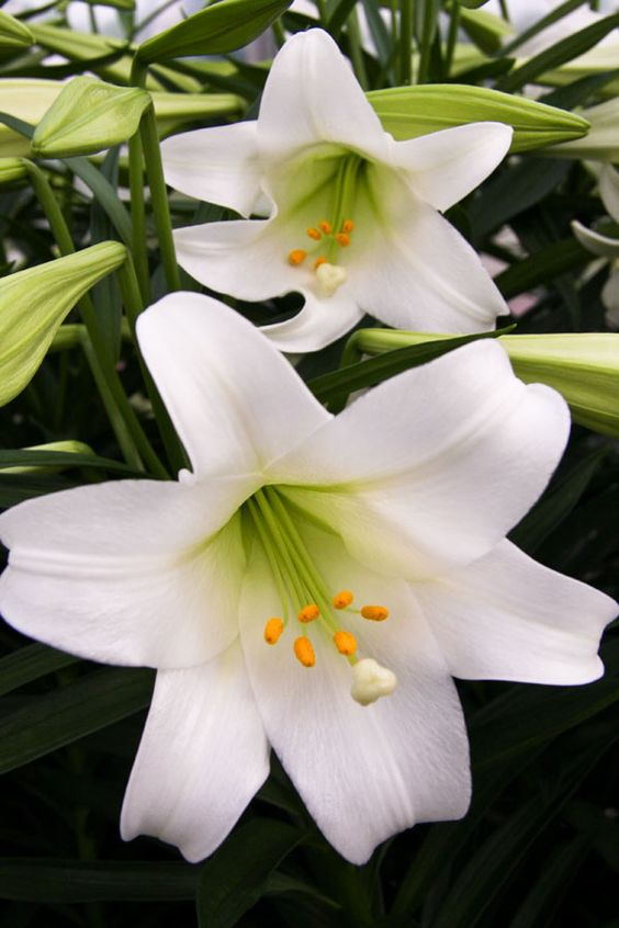 Plant Easter lily plants and they'll come back each year.  I will have to remember to mark where I plant them.: