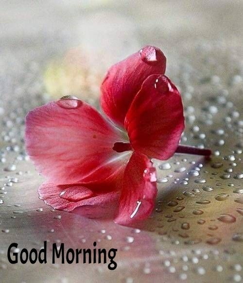 Pin By Suzy El Komous On Morning Wishes Good Morning Flowers Good Morning Images Morning Greeting