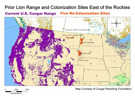 U S Mountain Lion Population Map of the Unit...