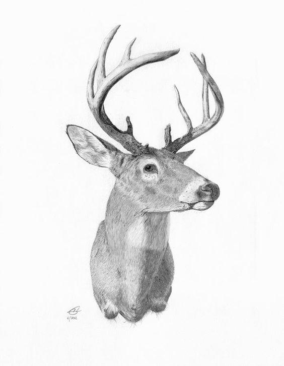 Whitetail Buck Head Sketch Deer Drawing Fine Art Print