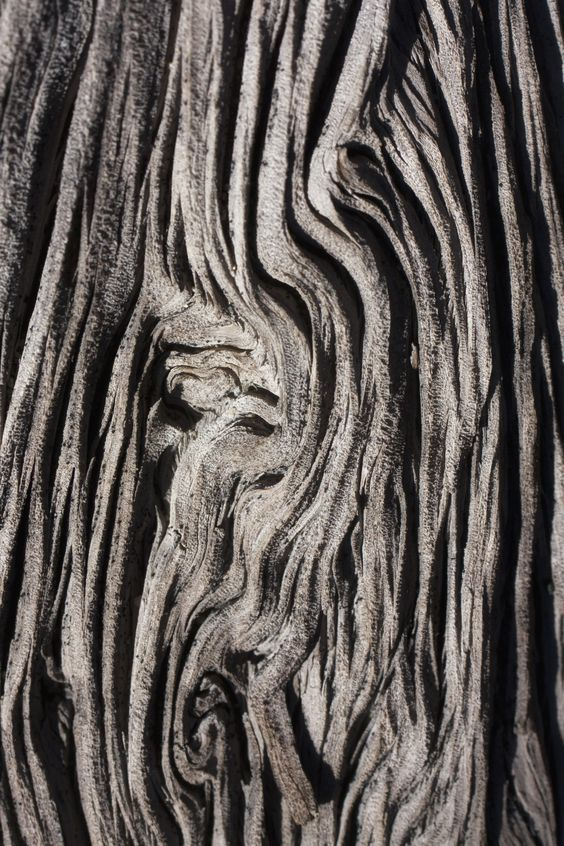 Tree Bark Textures with intricate patterns - organic texture source; nature's artwork: