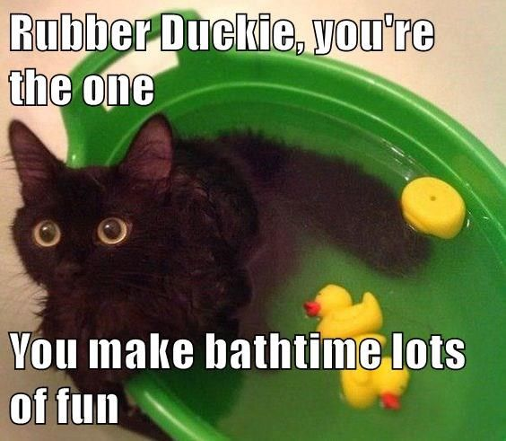 Rubber Duckie, you're the one  You make bathtime lots of fun