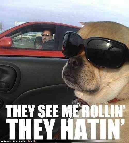 #cooldog