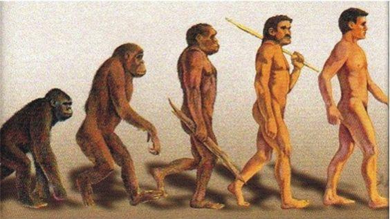 http://www.bob-toutelaverite.fr/David-Dennery-Les-Theories-de-l-Evolution_a298.html Théorie de l'évolution