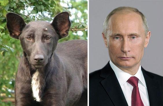 Собаки, похожие накого угодно, только ненасобак