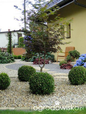 Ogrodomania Oli - strona 146 - Forum ogrodnicze - Ogrodowisko