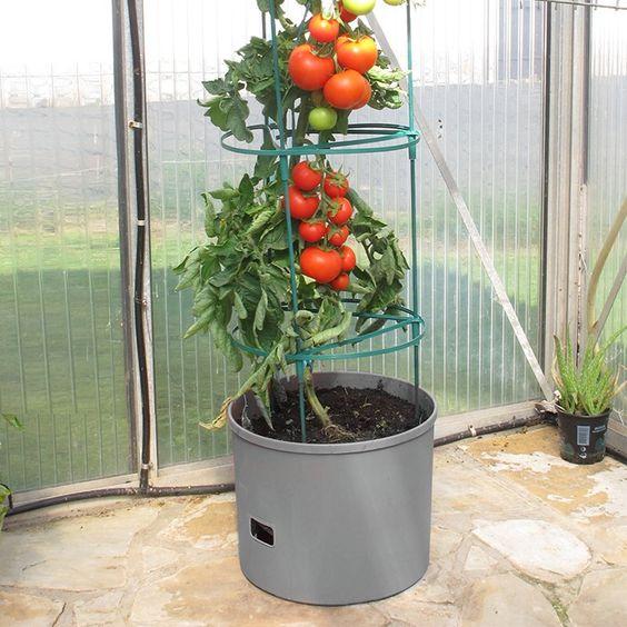 Plantepotte perfekt for tomatplanter! Komplett med 1,5 meter klatretårn og 8…