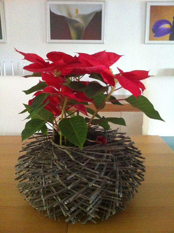 Nochebuena de centro de mesa