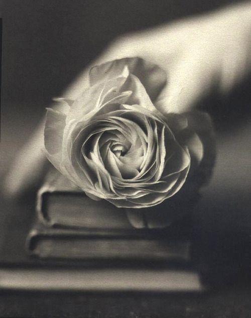 """""""Cultivé en el tiempo dos rosas con amor.  Y las vertí entre las páginas de unos libros antiguos.  A la espera de que mi sangre las encuentre ante mi ausencia.  Tan solo el color carmín de las palabras de un padre.""""   fw"""
