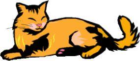 Die Eule sucht dich! x3 - Warrior Cats