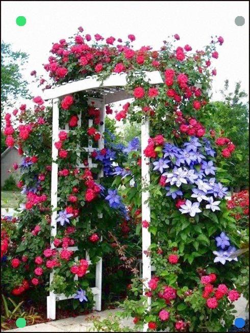 America Climbing Rose And Clematis Rose Garden Design Climbing Roses Garden Design