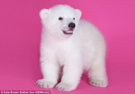 Luna the 3-month old polar bear