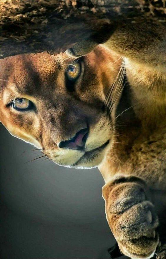Pixdaus Tiere Katzen Majestatische Tiere
