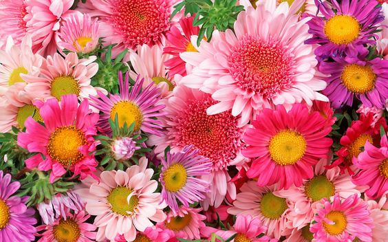 Beautiful Flowers Images Free Downloads