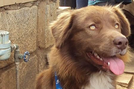 Chili dog, el perro callejero más caro del mundo. Chili Dog es un perro que cumplió su propio sueño americano ¿Conoces otras historias de perros callejeros? Aquí su historia completa >>http://www.clubperruno.com/noticias-de-perros/8721.html