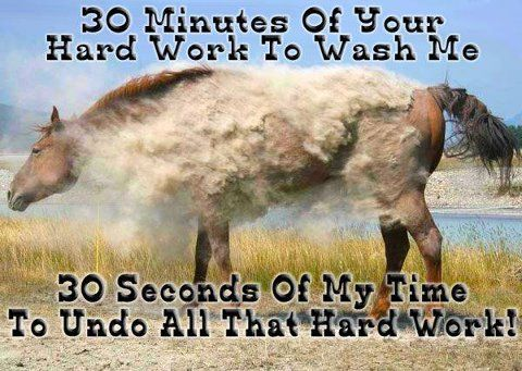 Story of my life!: Horse Pictures, Horse Quotes, Horse Stuff, Dirty Horse, My Life, So True, Horse Humor, Beautiful Horse