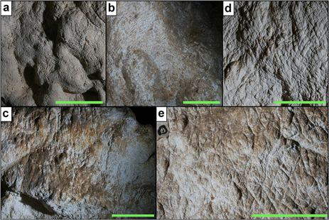 Claw marks from the cave made (most probably) by juvenile Marsupial Lions.