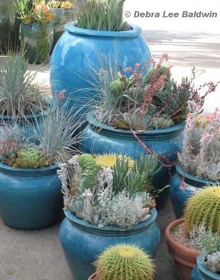 Turquoise pots hold echeverias blue senecio artemisia and the ornamental grass festuca glauca - Succulent container gardens debra lee baldwin ...