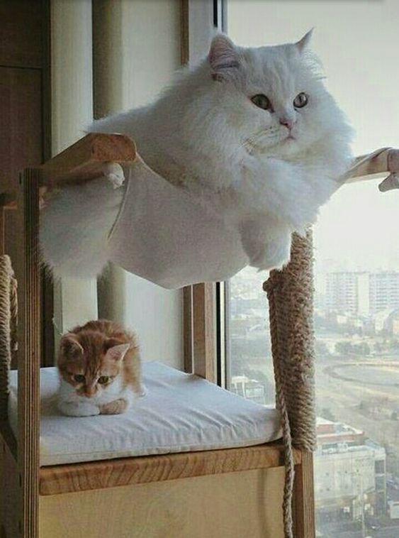 AStuce soigner sont chat naturelle 9cd5ee74a43800eb19fe877629581932