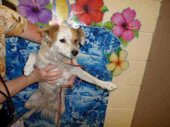 Animal call riverside county animal control coachella shelter at