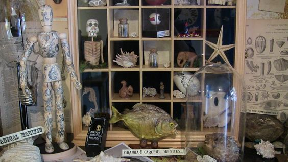 Our little Shop of Horrors - my cabinet of curiosities ...