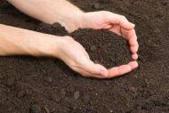 Terra, Substrato ou Condicionador. O que é melhor para sua planta no replantio?