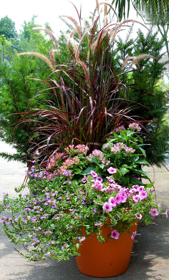 Container garden petunias and grasses on pinterest - Best flower combinations for containers ...