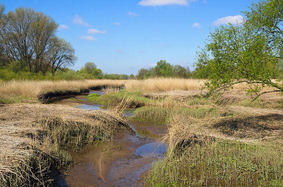 Das Heuckenlock an der Süderelbe, einer der letzten Tideauwälder Europas, und eine der wenigen verbliebenen Flachwasserzonen der Niederelbe https://de.wikipedia.org/wiki/Hamburger_Hafen