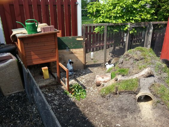Love the idea of buried tunnels to make warrens that wud for Outdoor rabbit enclosure ideas